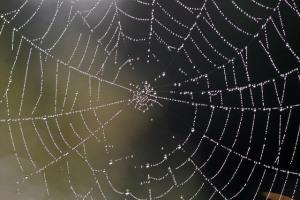 cobweb-480711_640